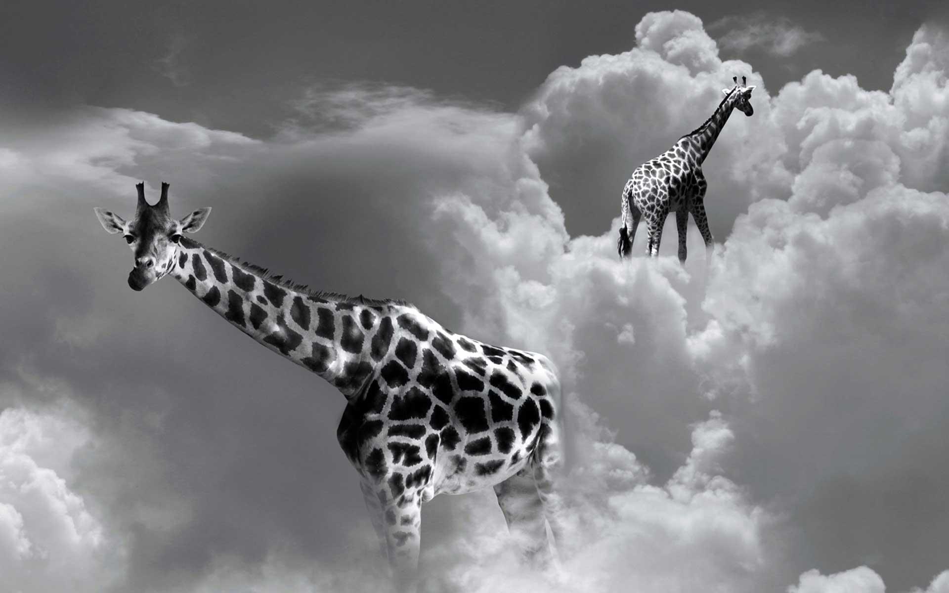 giraffe_def1